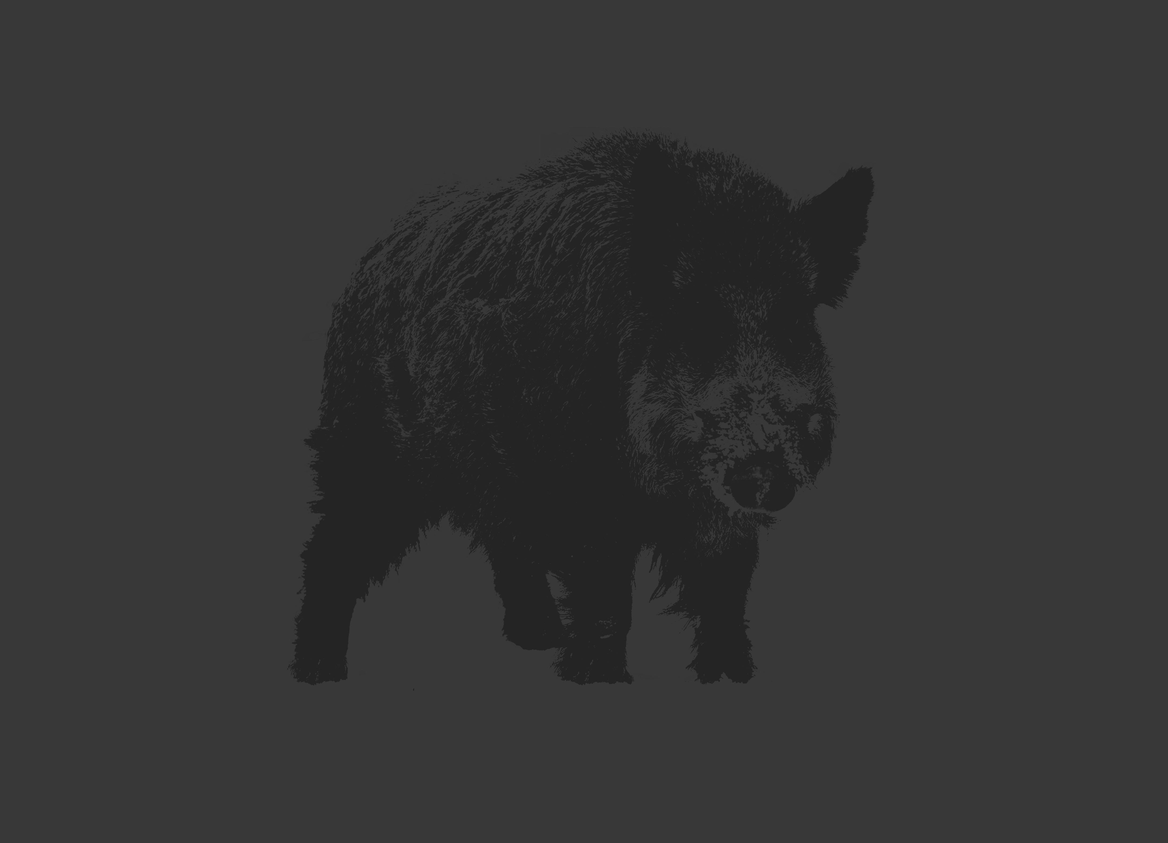 Boar | UX & graphic design